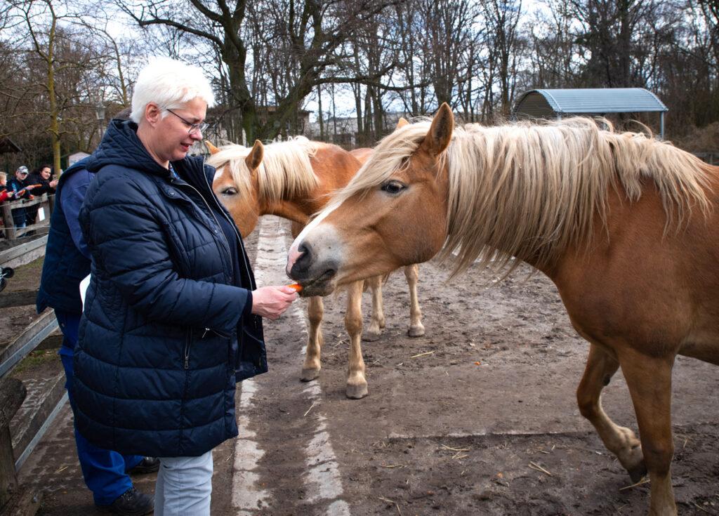 Zwei neue Pferde für Gutshof Britz 2
