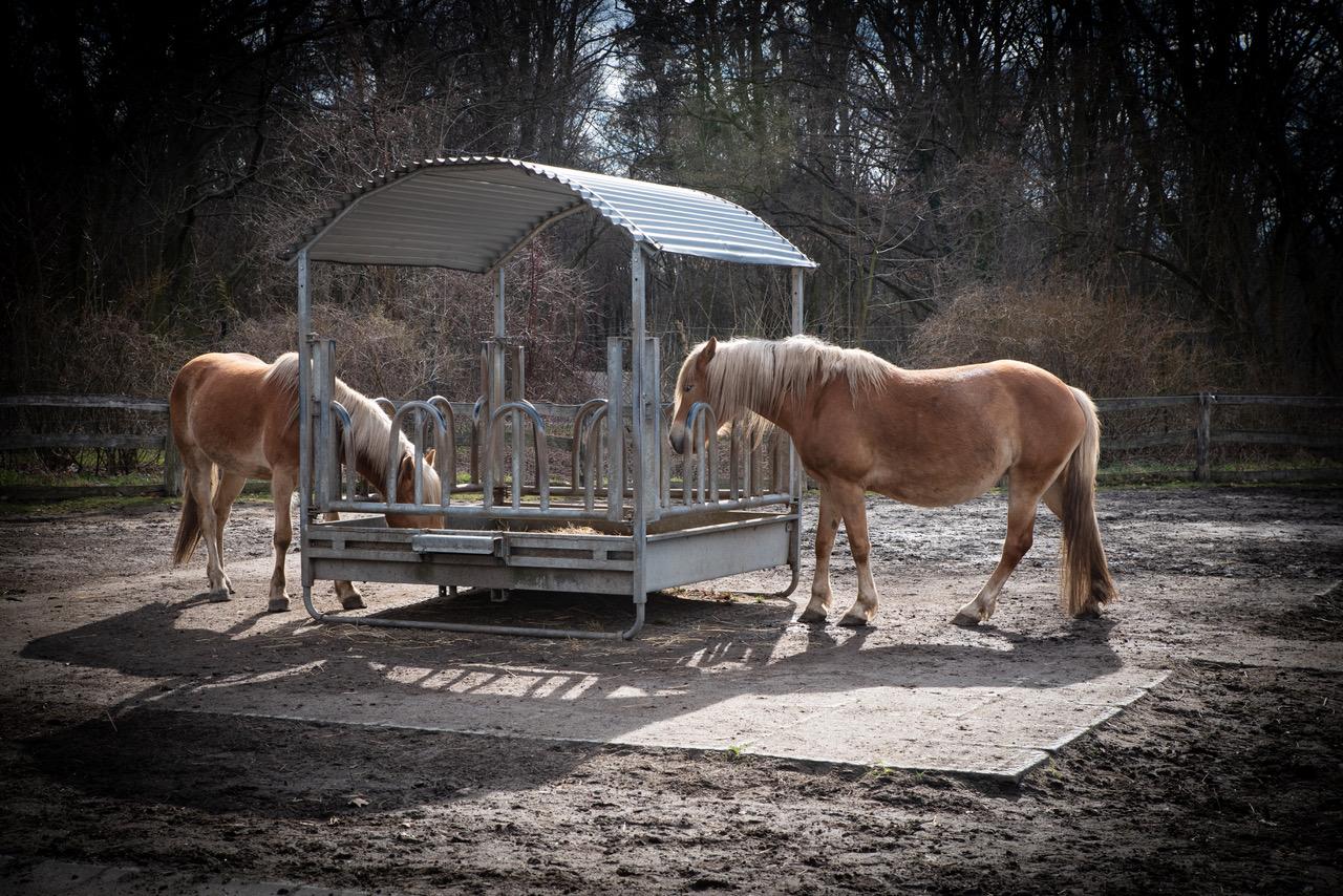Zwei neue Pferde für Gutshof Britz 5